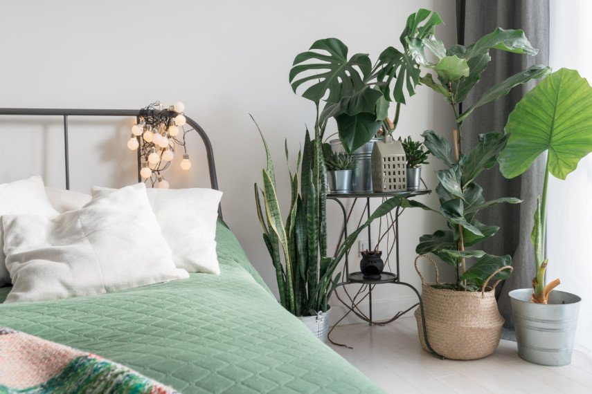 Close up of a bed corner and side table filled with plants